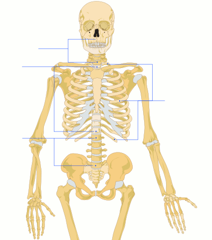 Ciencia - anatomia